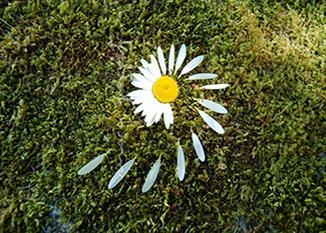 Exposition «Artiste de nature, artiste de jardin(s)»